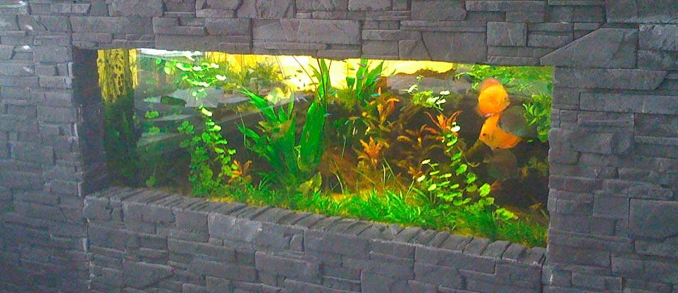 wohnzimmer, freiburg - fish & reps® - aquarienbau und terrarienbau - Aquarium Wohnzimmer