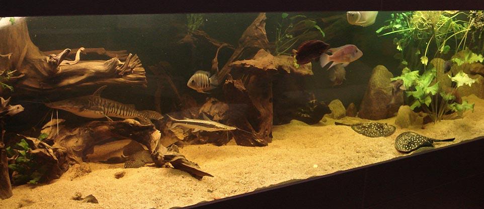 wohnzimmer, lörrach - fish & reps® - aquarienbau und terrarienbau - Aquarium Wohnzimmer